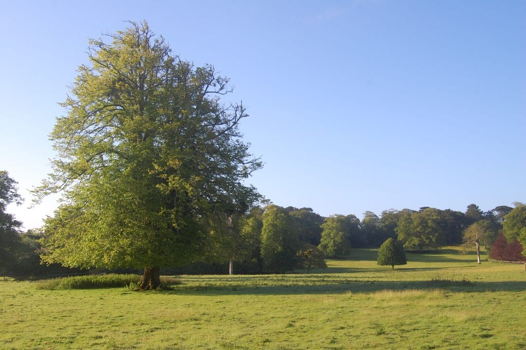 Scorrier Estate, Great Estate, Cornwall, Ollie Williams